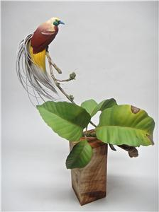 MINIATURE LESSER BIRD OF PARADISE