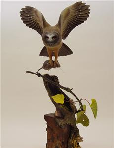 LIFESIZE SAW-WHET OWL WITH DEER MOUSE