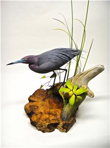 LIFE-SIZE LITTLE BLUE HERON & COMMON YELLOW THROAT WARBLER