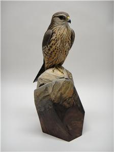 LIFE-SIZE JUVENILE MALE MERLIN
