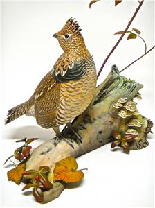 LIFESIZE RUFFED GROUSE WITH GOLDEN CROWN KINGLET